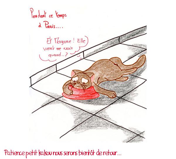 Chat qui s'ennui dans sa gamelle