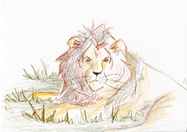 Crayons de couleur dessin de lion