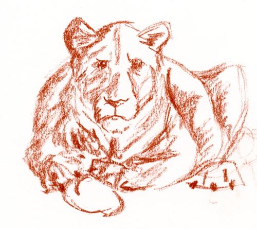 Dessin sanguine lionne
