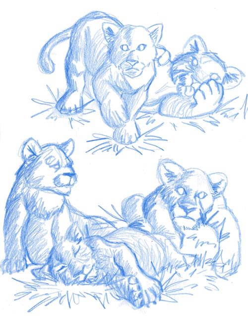 Dessin lionceaux, crayon lionceau
