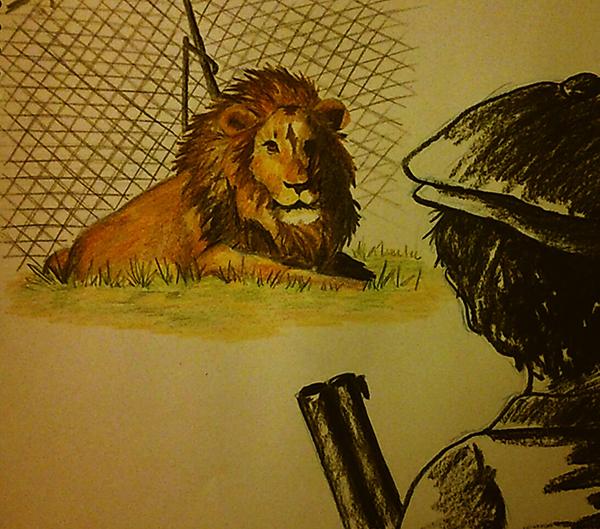 La chasse en boite aux lions