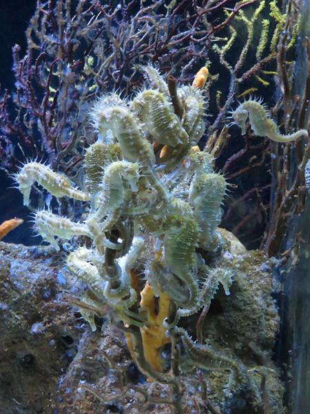 L'aquarium de Barcelone