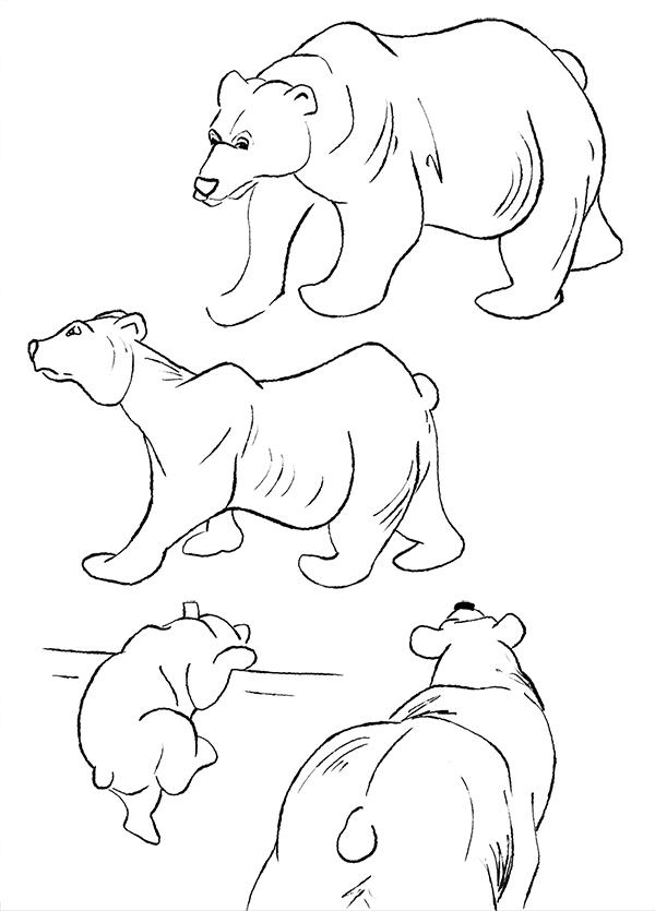 Dessin feutre ours