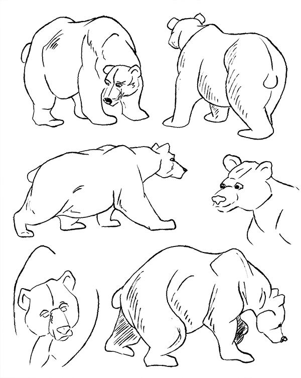 Croquis dessin recherches ours