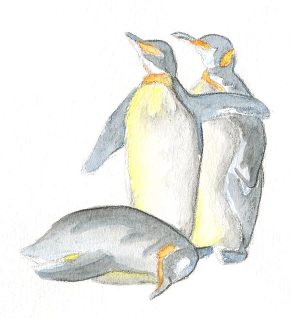 Recherche aux crayons aquarelle illustration animal pinguoin