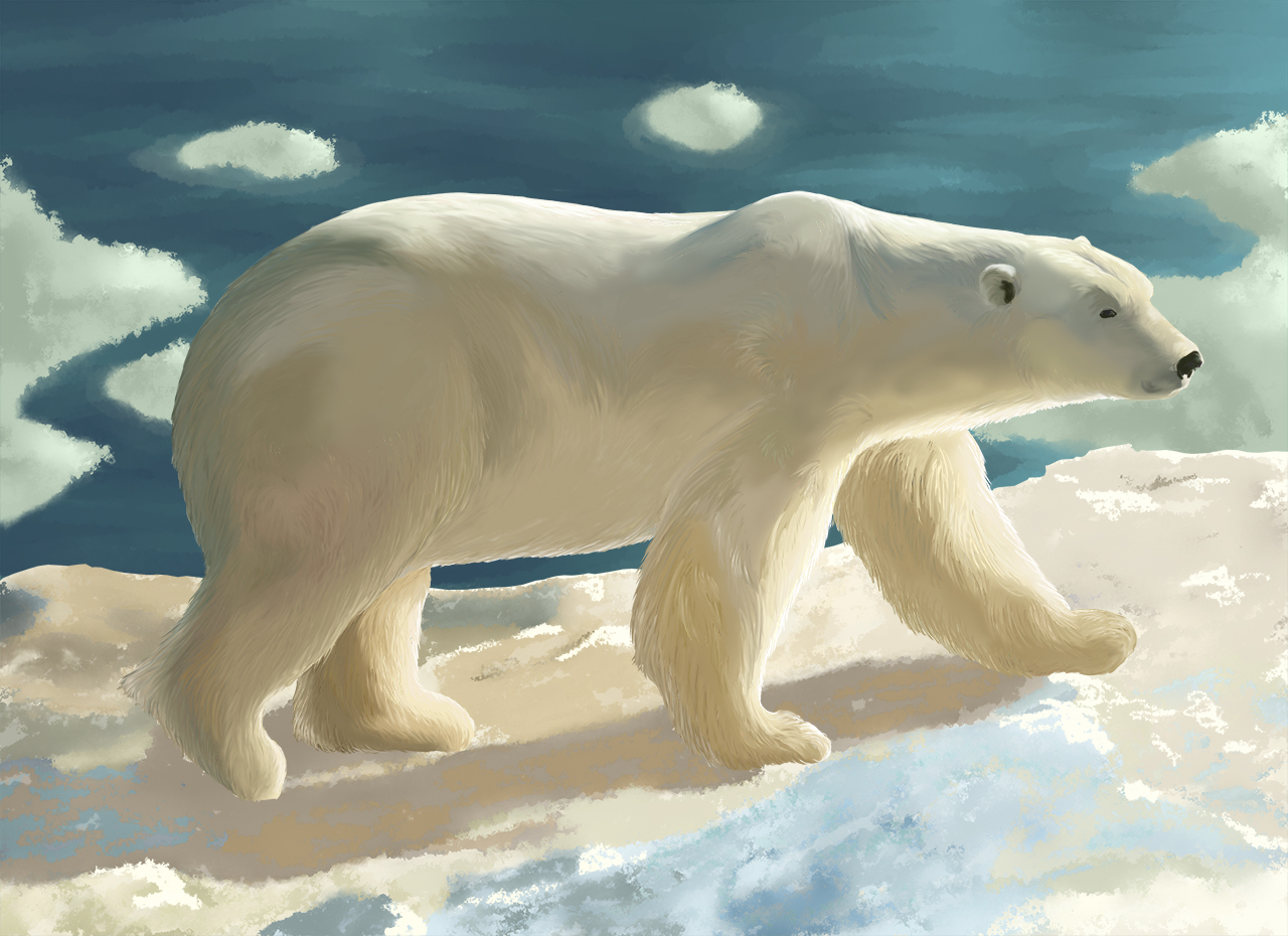 Illustration animale ours blanc blog dinett - Ours polaire banquise ...