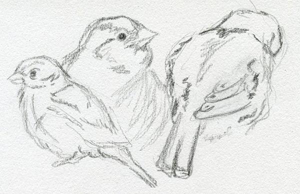 Croquis dessin au crayon gris moineaux