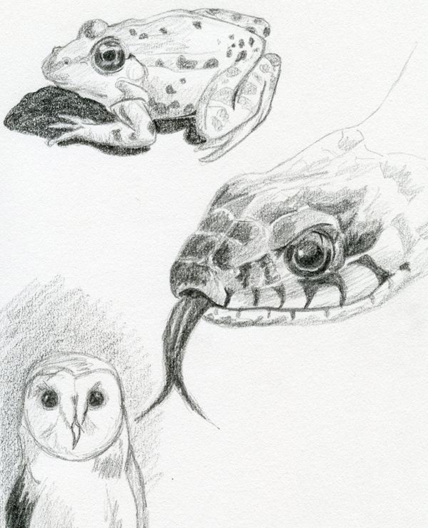 Croquis dessin au crayon gris animaux