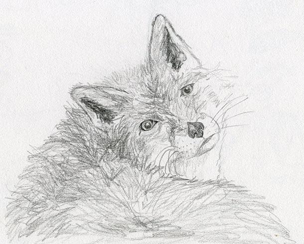 Dessin crayon renard