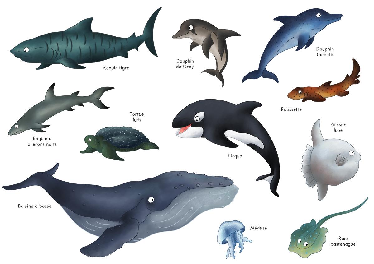 Top Imagier : les animaux marins | Blog Dinett QU72