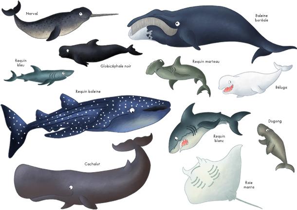 Imagier les animaux des océans