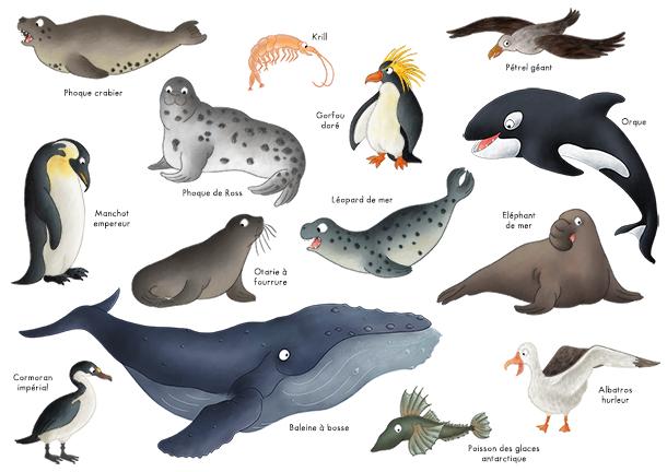 Imagier les animaux du pôle sud