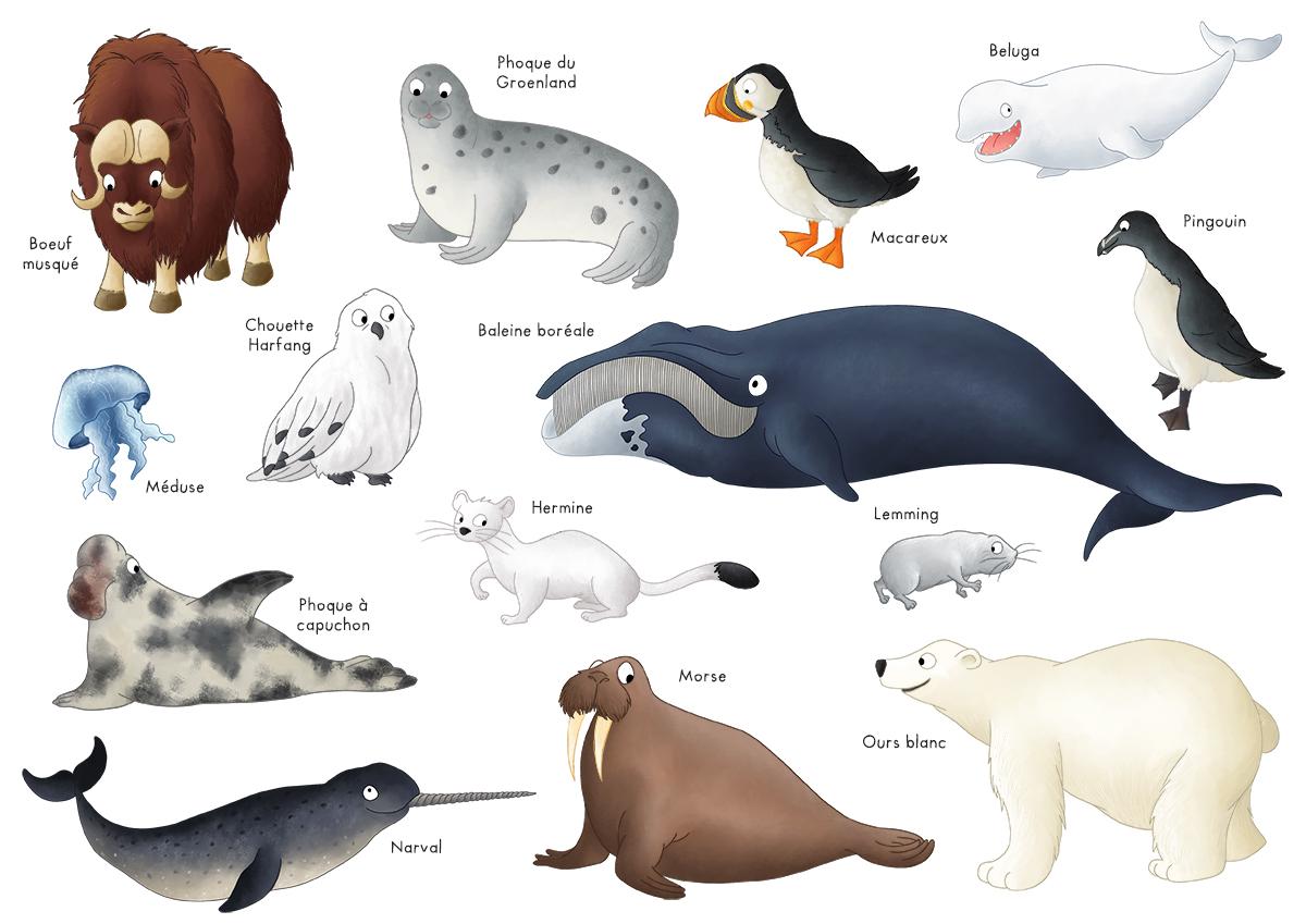 Imagier les animaux du p le nord p le sud blog dinett - Animaux pole nord ...