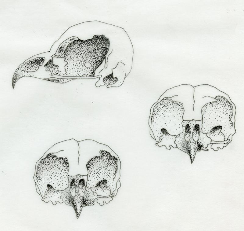 crane-oiseau-feutre