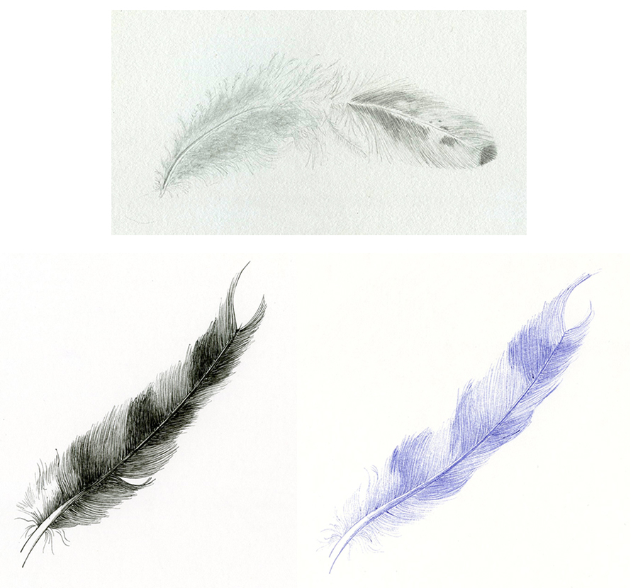 plumes-oiseaux